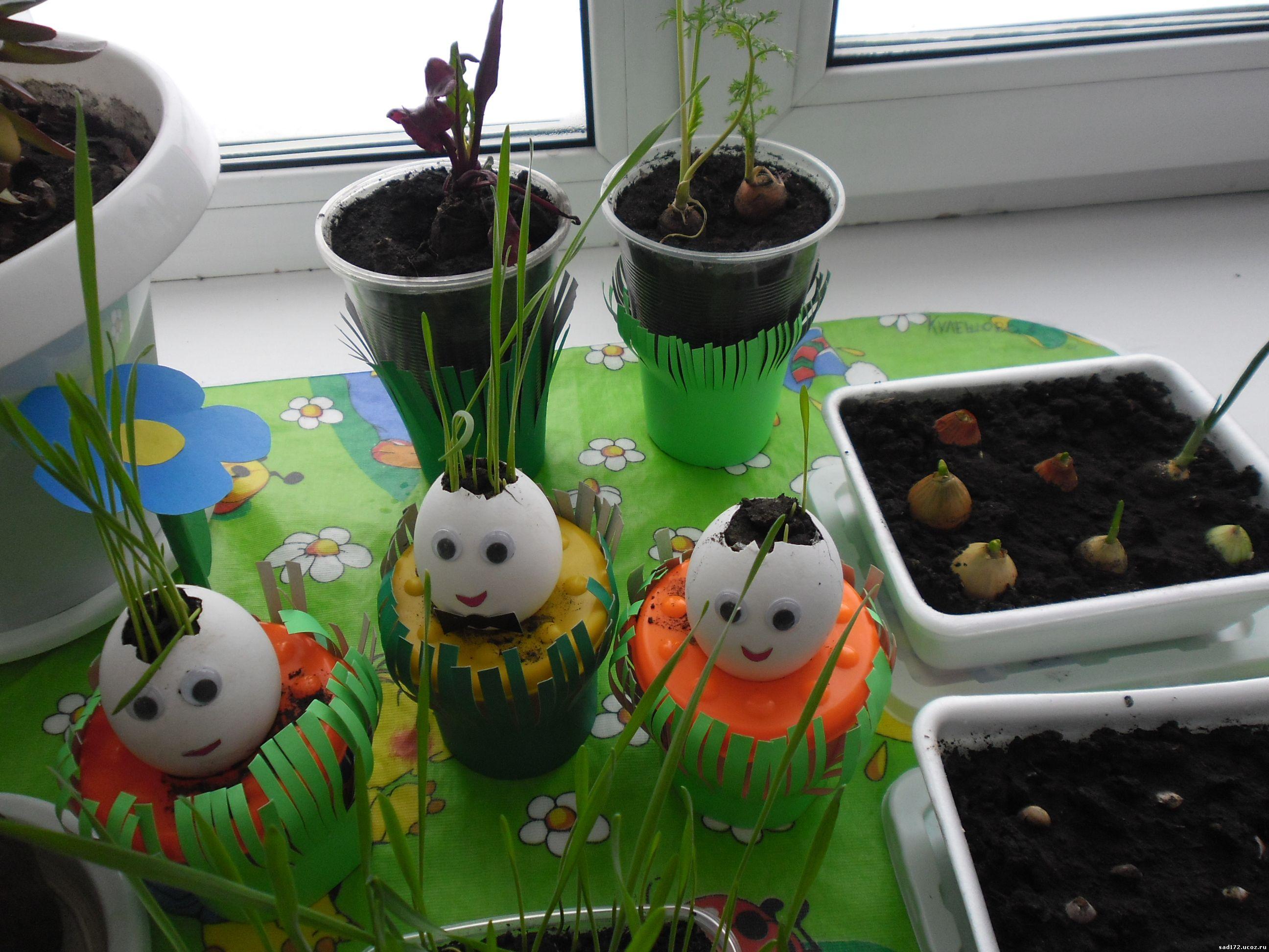 Выращивание растений в помещении, теплицах 40